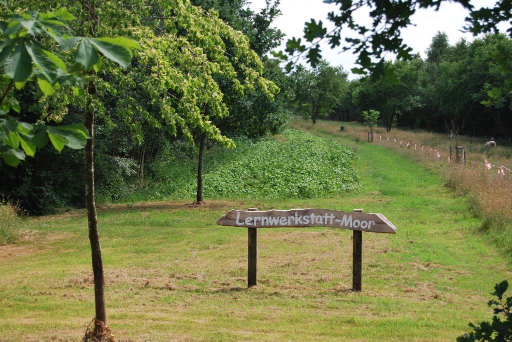Die Saat der Blühwiese am Moor - Lehrpfad ist aufgegangen