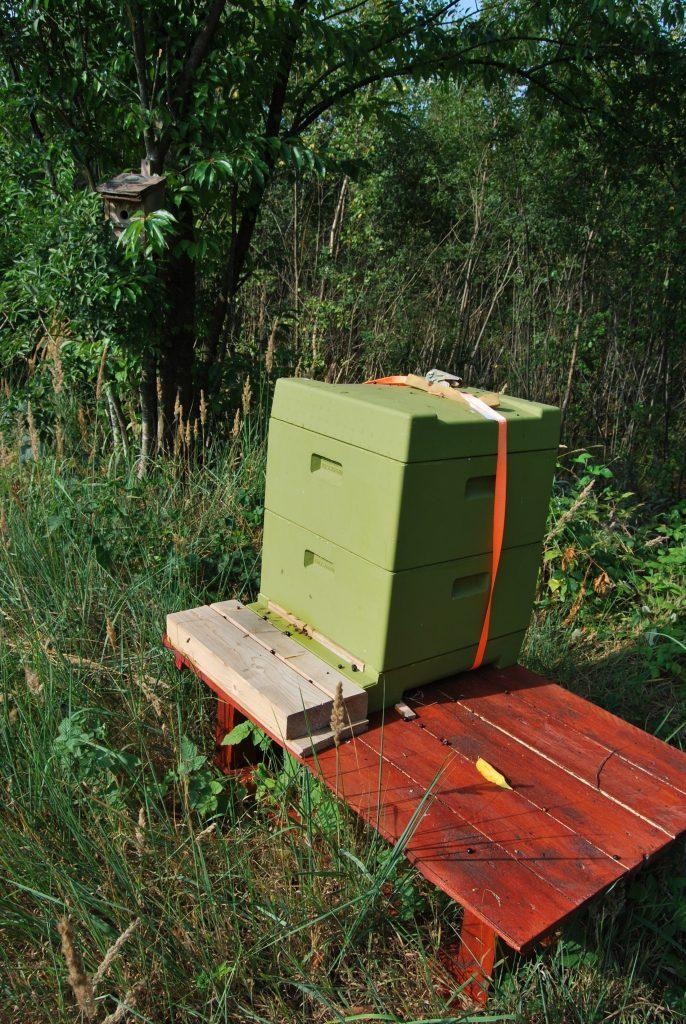 Bienenstock inmitten der Blühwiesen.